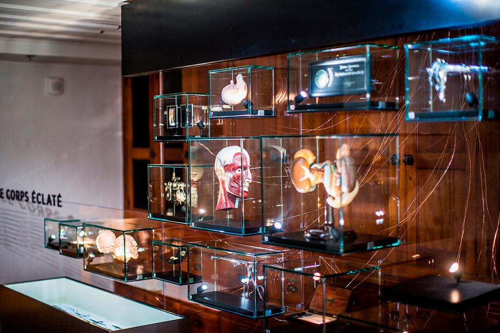 Pièces de collection portant sur le corps humain appartenant au Musée du Monastère des Augustines.